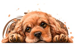 American Cocker Spaniel. Sticker on the wall. Realistic, hand-drawn, artistic, color portrait of an American Cocker Spaniel puppy on a white background in watercolor style.