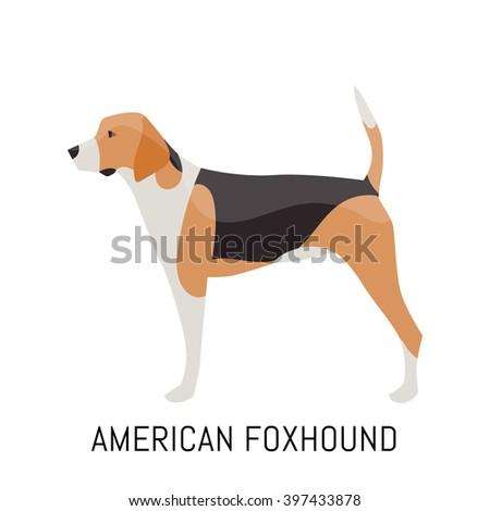 american foxhound dog  flat