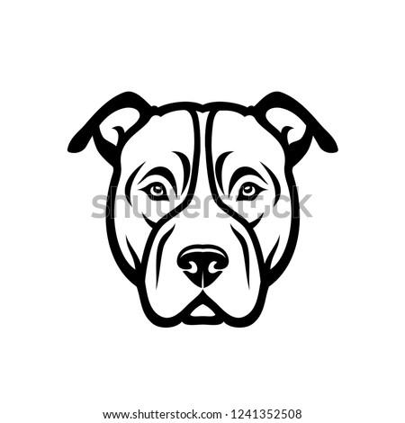 american pitbull terrier dog