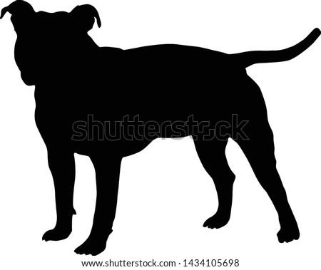 american staffordshier terrier