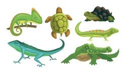 Amphibian Animals Species Collection, Turtle, Chameleon, Lizard, Crocodile, Salamander Vector Illustration