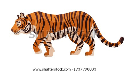 Amur tiger goes isolated on white background. Vector tiger side view. Endangered animal