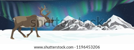 an adult reindeer walks through