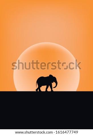 an elephant walking in the