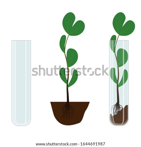 An experiment in biotechnology is growing a plant in a glass test tube. Set of elements for vector illustration on the topic of biological research.