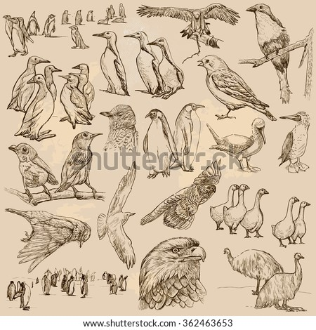 an hand drawn collection  birds