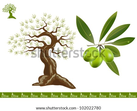 An old olive tree and an interesting olive tree sing for olive products, green olive branch.