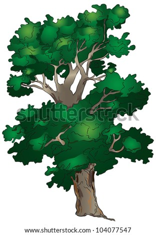 An old tree with a branching crown. Vector illustration.