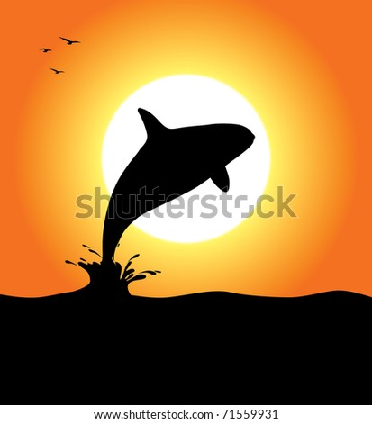 An orca whale silhouette jumping at sunset. Editable vector illustration.