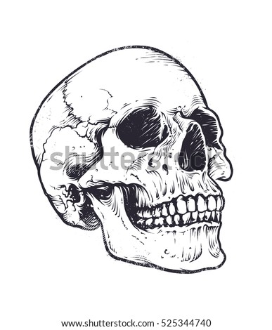 anatomic skull vector art