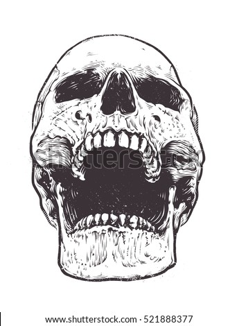 anatomic skull vector art