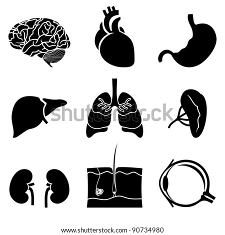 anatomical icons