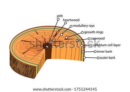 anatomy of a tree isolated on
