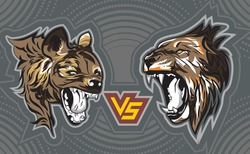 Angry Hyena versus Angry Male Lion.Drawing and sketch in vector illustration.