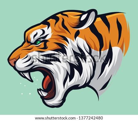 angry roaring tiger  panthera