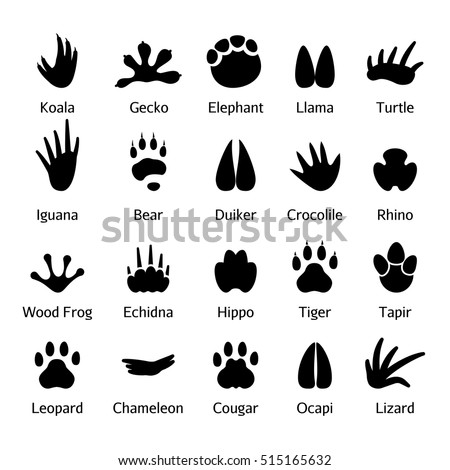 animal and reptile footprints
