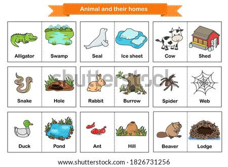 Animal and Their Homes Flash Cards. Printable flash card illustrating : Alligator, Seal, Cow, Snake, Rabbit, Spider, Duck, Ant, Beaver - Flashcards for education.