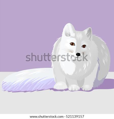 animal arctic fox