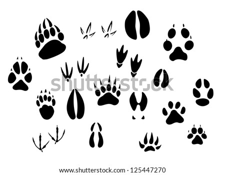 Animal - birds and mammals - footprints silhouettes set isolated on white background, such as idea of logo. Jpeg version also available in gallery