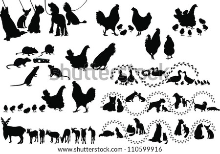 Animal birds dog cats hen duck rat goats isolated white background