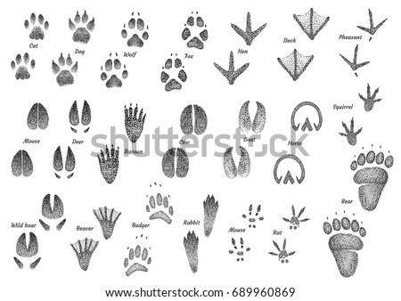 animal footprint collection...