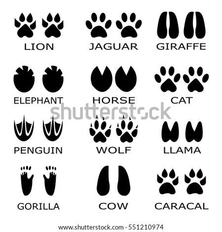 animal footprints vector set