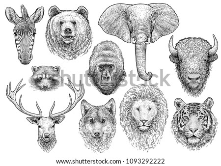 animal head collection