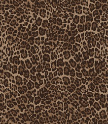 Animal skin leopard pattern in vector