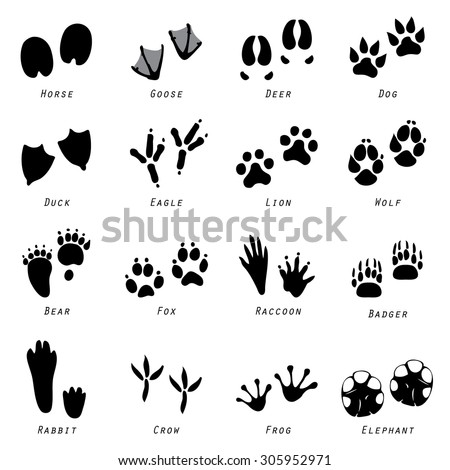 animal spoor footprints icon
