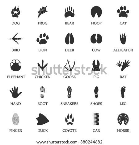 animal track prints set animal