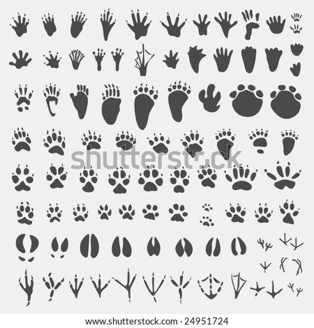 Animal Tracks - stock vector