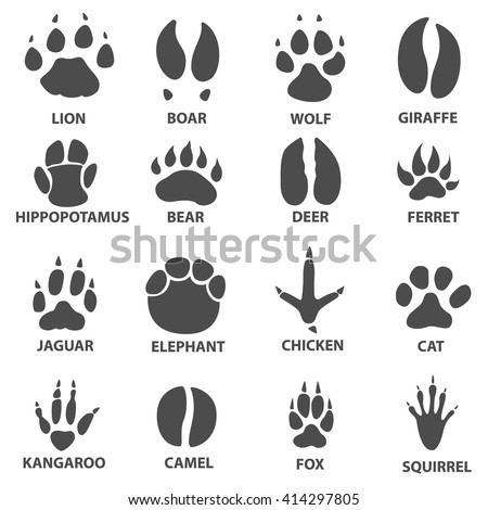 animal trail. Next to the name of the animal. Animal tracks vector illustration. animal paw print with the description.