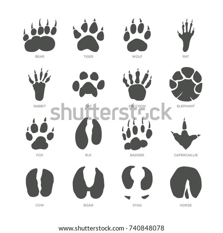 Animal trails - modern isolated vector set, white background with description. Bear, tiger, wolf, rat, rabbit, cat, raccoon, elephant, fox, elk, badger, capercaillie, cow, boar, stag, horse footprint