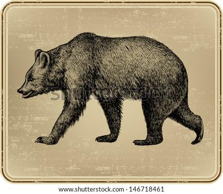animal wild bear  hand drawing. ...
