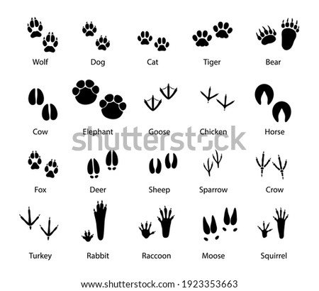 Animals and birds feet tracks, vector trails of wolf, dog and cat, tiger and bear with cow and elephant. Goose, chicken, horse and fox, deer with sheep or sparrow and crow. Turkey, rabbit and raccoon Zdjęcia stock ©