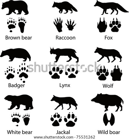animals and its tracks vector