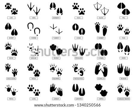 Animals footprints. Animal feet silhouette, frog footprint and pets foots silhouettes prints. Wild african animals paw walking track or footprint tracks. Vector illustration isolated sign set