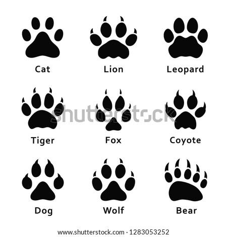 animals footprints  paw prints