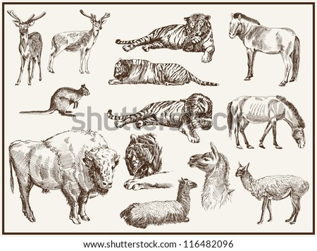 animals from the zoo. set of...