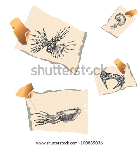 Animals - life in the sea (underwater). A series of detailed drawings on pieces of papers