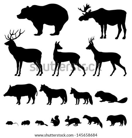 animals living in european