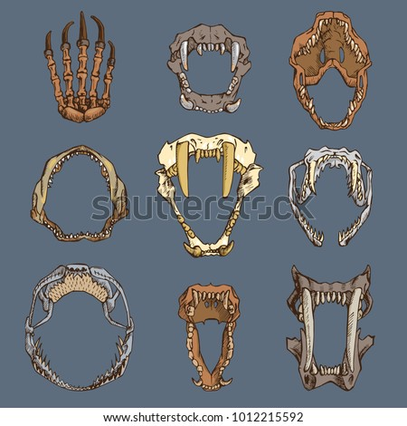 Animals mouth vector open boney jaw with teeth or fangs of roaring animals angry lion bear and aggressive wolf illustration set skeleton of animalistic beast isolated on white background