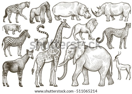animals of africa elephant