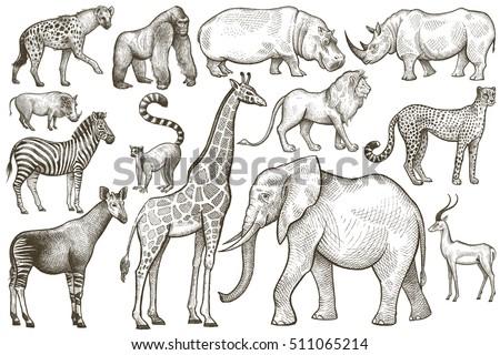 Animals of Africa. Elephant, giraffe, zebra, lion, hippo, rhino, antelope, hyena, okapi, cheetah, gorilla, warthog, lemur. Illustration Vector Art. Vintage engraving. Hand drawing. Black and white.
