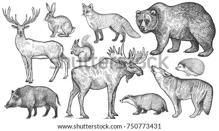 Shutterstock Animals of Europe set. Wolf, badger, hedgehog, fox, moose, deer, bear, rabbit, squirrel, boar isolated. Black and white. Vector art illustration. Wildlife mammals. Nature objects. Vintage engraving.