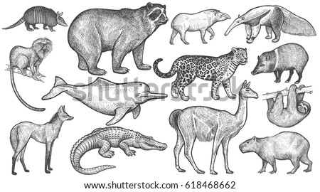 animals of south america big...