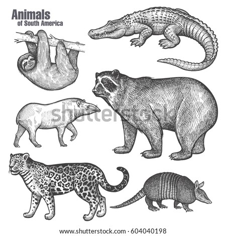Animals of South America set. Spectacled Bear, Jaguar, Sloth, Caiman, Armadillo, Tapir. Hand drawing. Vintage engraving style. Vector illustration art. Black and white isolated object of nature sketch