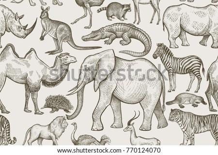 Animals of wild world seamless pattern. Elephant, tiger, lion, zebra, kangaroo, camel, rhinoceros, antelope, crocodile, raccoon, ostrich, echidna on white background. Vintage. Vector illustration art.