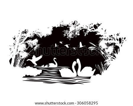 animals of wildlife  swan