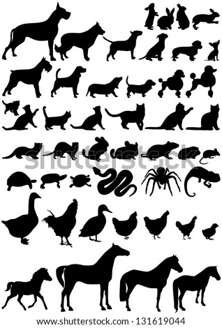 animals shape